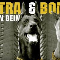 Kontra & Bonez