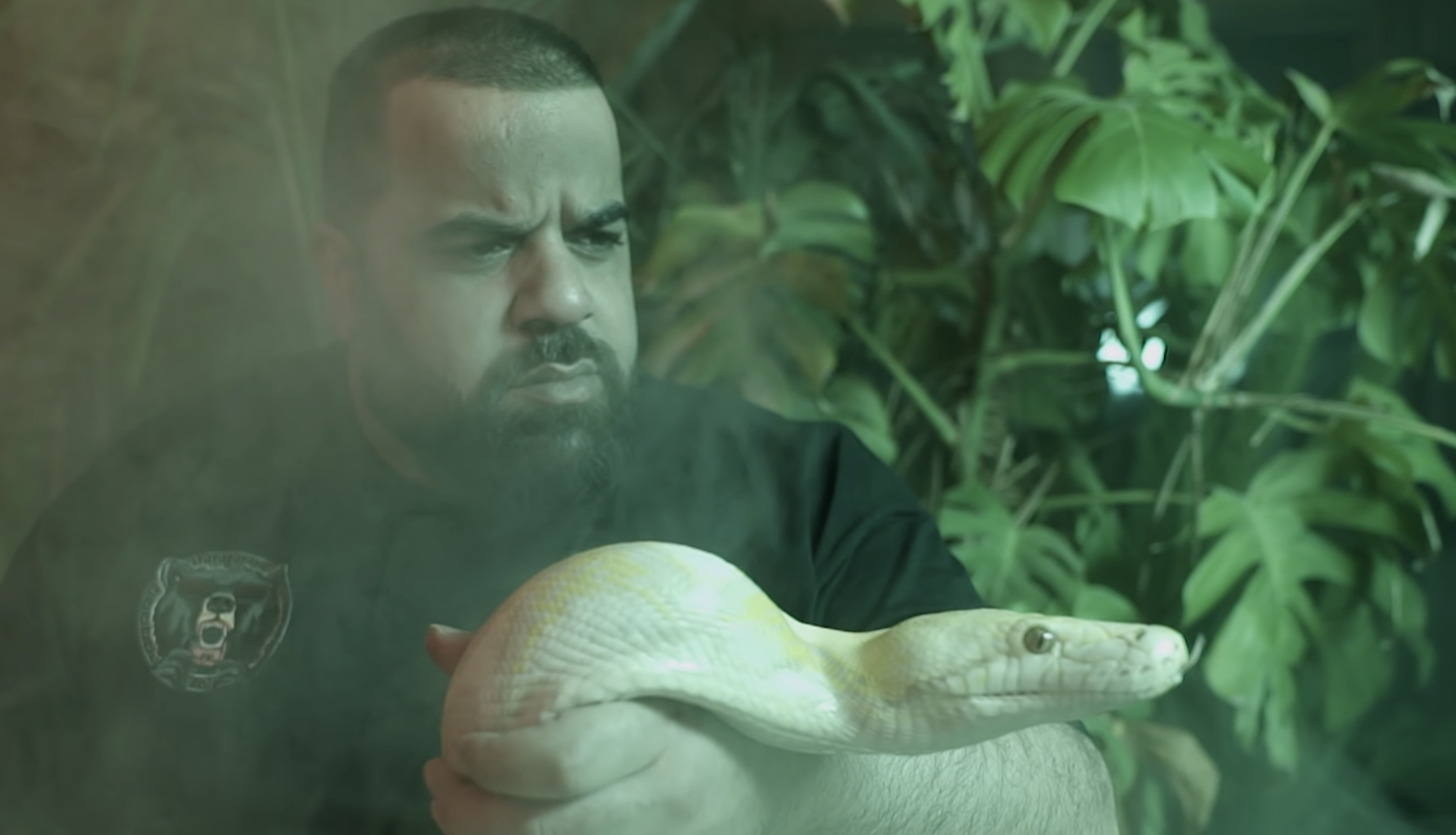 Schlangen